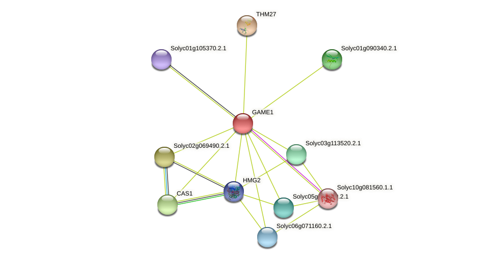 GAME1 protein (Solanum lycopersicum) - STRING interaction network