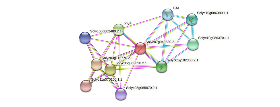Solyc07g043580.2.1 protein (Solanum lycopersicum) - STRING interaction network