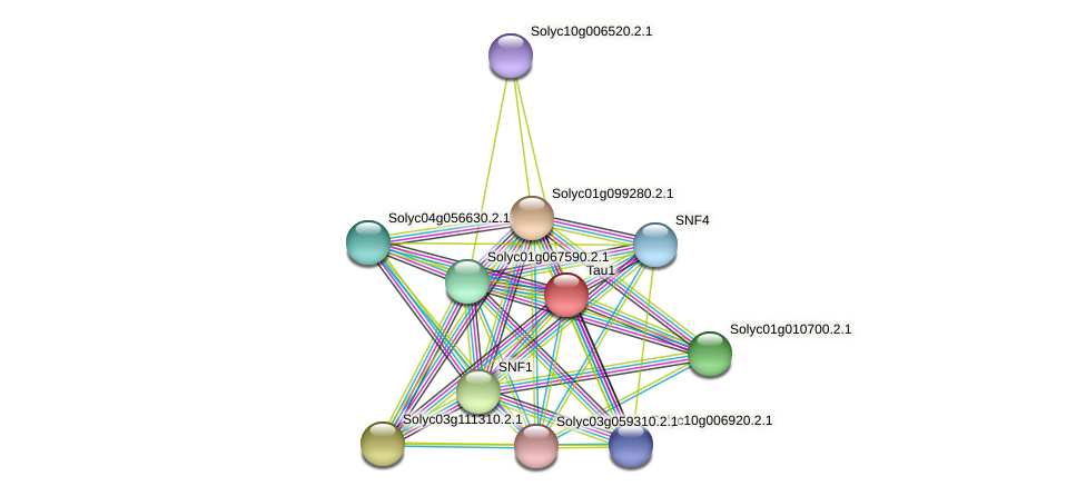 Solyc07g045460.2.1 protein (Solanum lycopersicum) - STRING interaction network