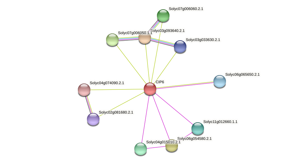 CIP6 protein (Solanum lycopersicum) - STRING interaction network
