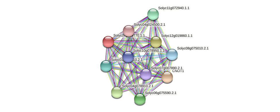 Solyc07g049770.1.1 protein (Solanum lycopersicum) - STRING interaction network