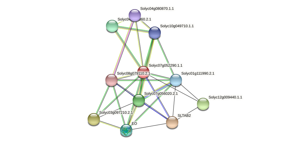 101255215 protein (Solanum lycopersicum) - STRING interaction network