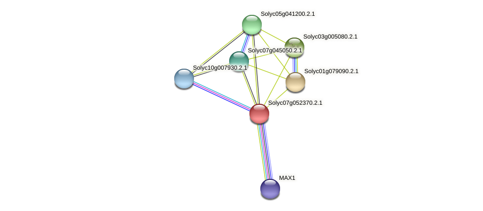 Solyc07g052370.2.1 protein (Solanum lycopersicum) - STRING interaction network