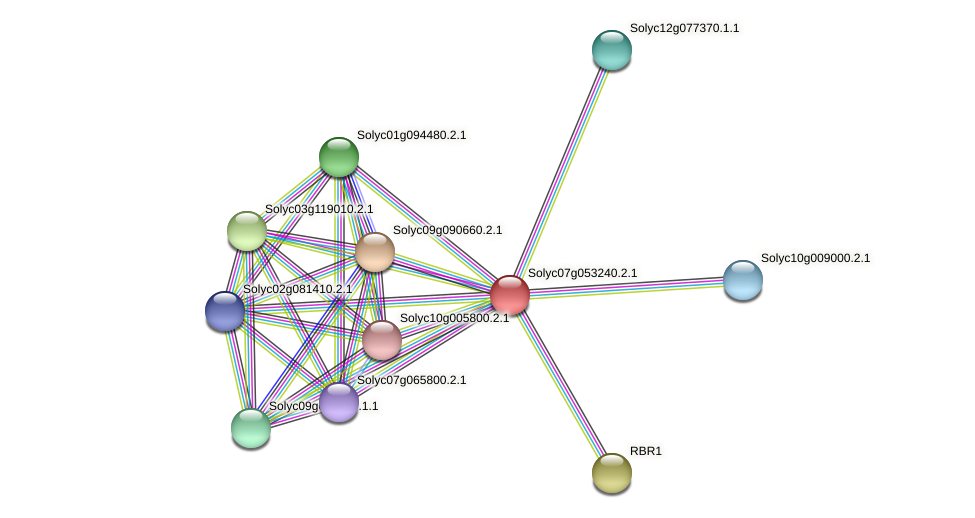 Solyc07g053240.2.1 protein (Solanum lycopersicum) - STRING interaction network