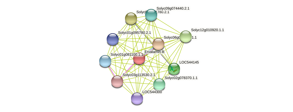 Solyc07g053460.2.1 protein (Solanum lycopersicum) - STRING interaction network