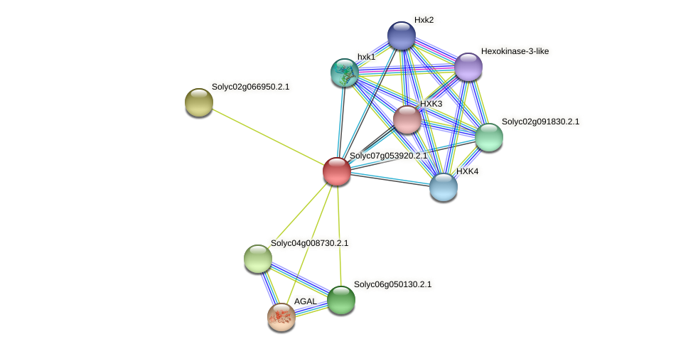 101245376 protein (Solanum lycopersicum) - STRING interaction network