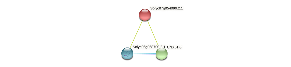Solyc07g054090.2.1 protein (Solanum lycopersicum) - STRING interaction network