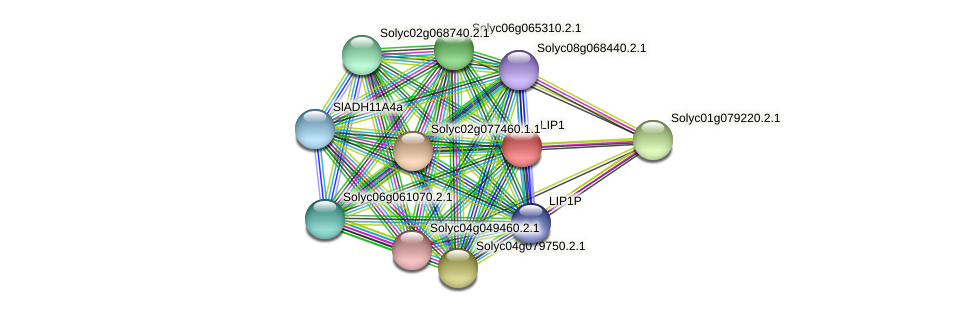 LIP1 protein (Solanum lycopersicum) - STRING interaction network