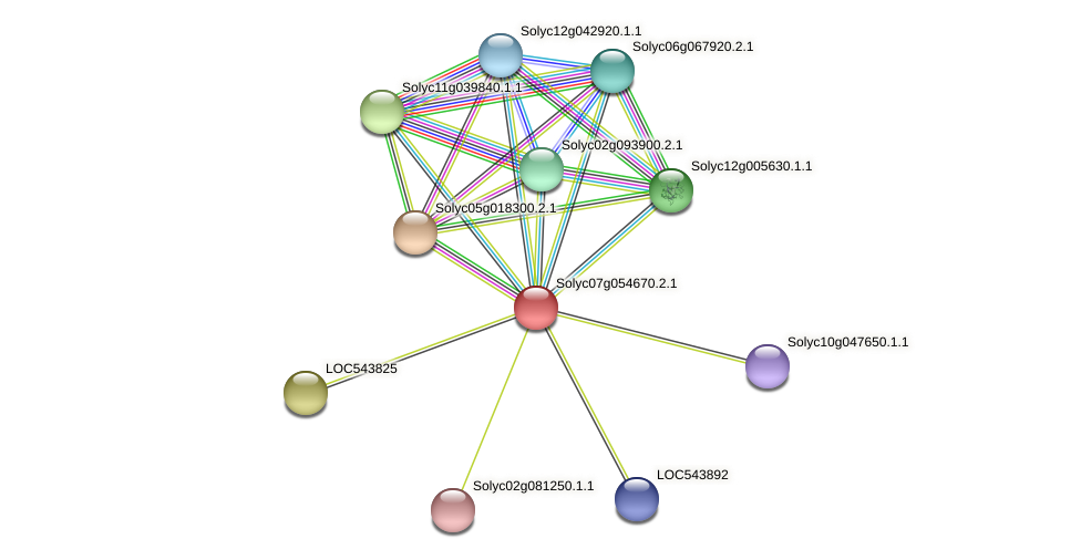 101256786 protein (Solanum lycopersicum) - STRING interaction network