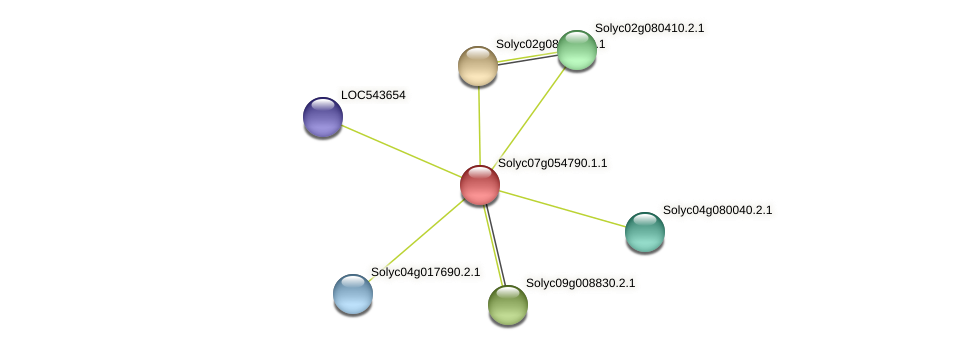 Solyc07g054790.1.1 protein (Solanum lycopersicum) - STRING interaction network