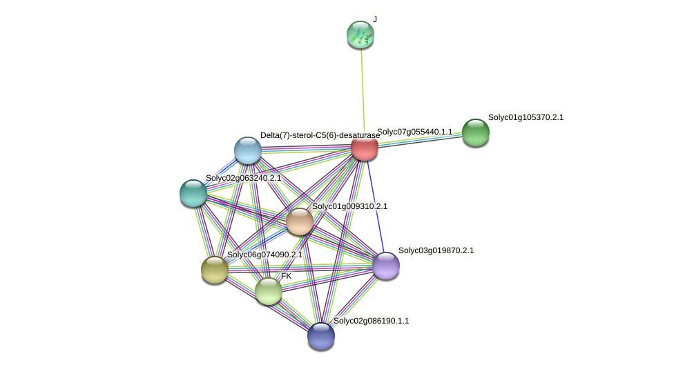 101265559 protein (Solanum lycopersicum) - STRING interaction network