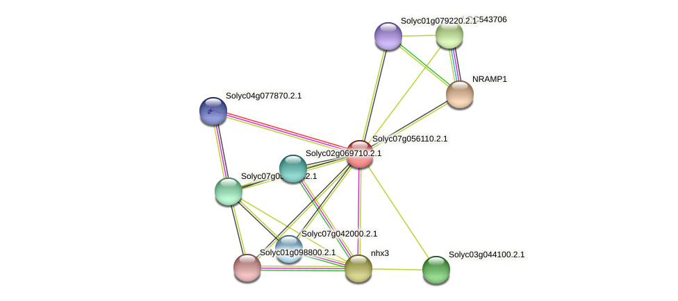 Solyc07g056110.2.1 protein (Solanum lycopersicum) - STRING interaction network