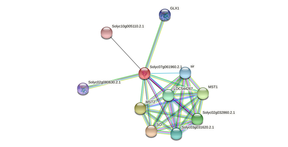 101254405 protein (Solanum lycopersicum) - STRING interaction network