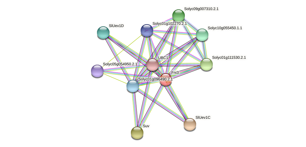Fni3 protein (Solanum lycopersicum) - STRING interaction network