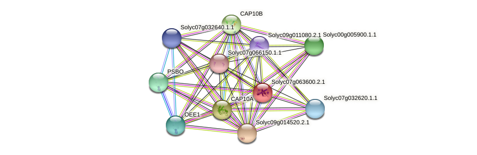 101268123 protein (Solanum lycopersicum) - STRING interaction network
