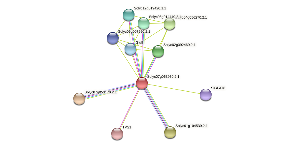 Solyc07g063950.2.1 protein (Solanum lycopersicum) - STRING interaction network