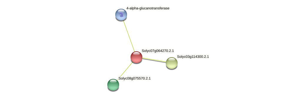 Solyc07g064270.2.1 protein (Solanum lycopersicum) - STRING interaction network