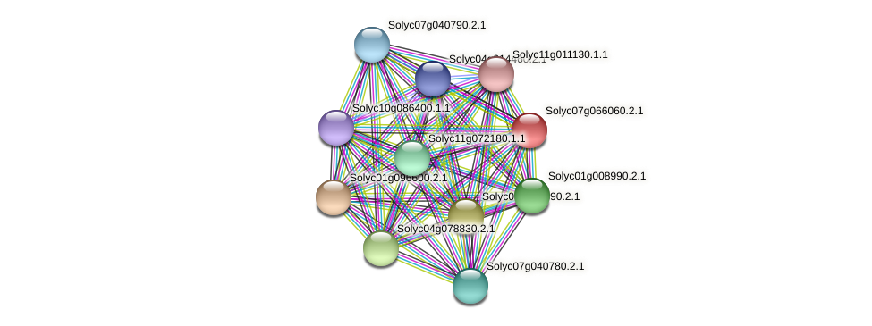 Solyc07g066060.2.1 protein (Solanum lycopersicum) - STRING interaction network