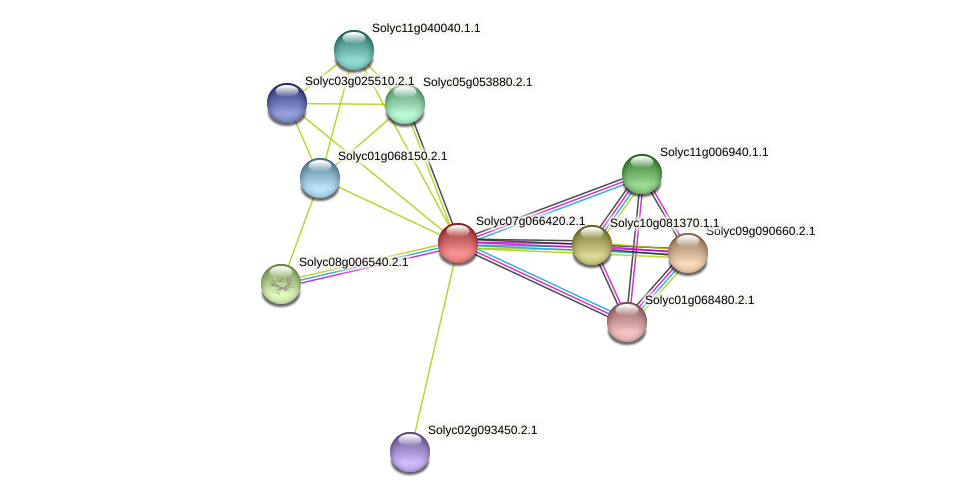 101259174 protein (Solanum lycopersicum) - STRING interaction network