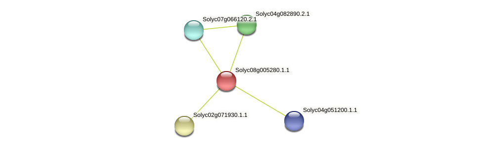 Solyc08g005280.1.1 protein (Solanum lycopersicum) - STRING interaction network