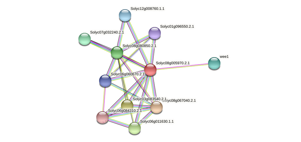Solyc08g005970.2.1 protein (Solanum lycopersicum) - STRING interaction network
