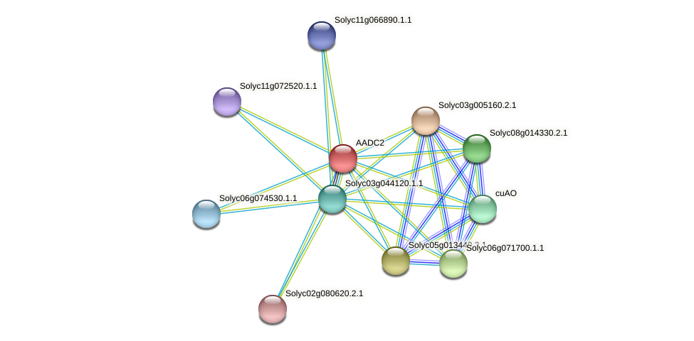 AADC2 protein (Solanum lycopersicum) - STRING interaction network