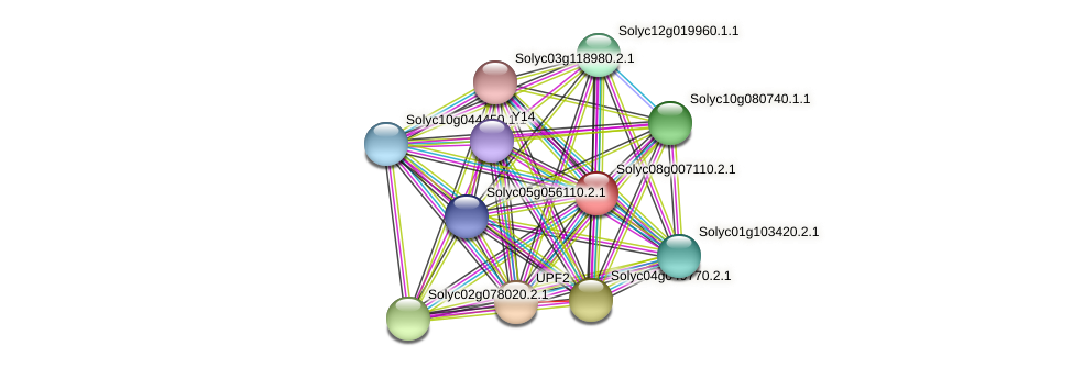 Solyc08g007110.2.1 protein (Solanum lycopersicum) - STRING interaction network