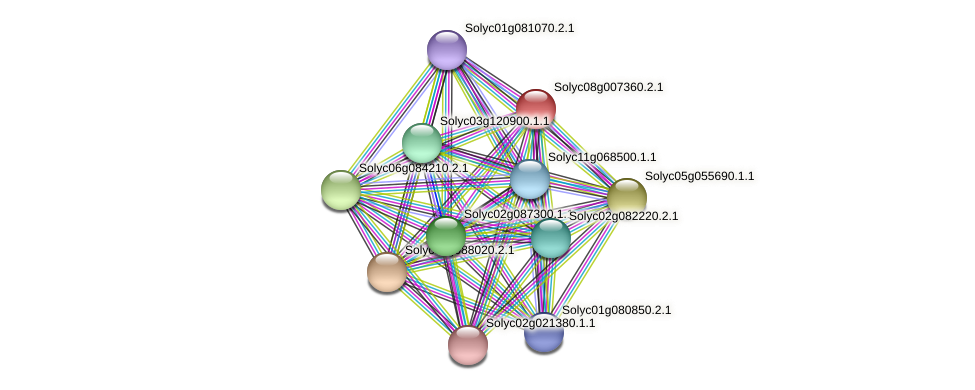 Solyc08g007360.2.1 protein (Solanum lycopersicum) - STRING interaction network