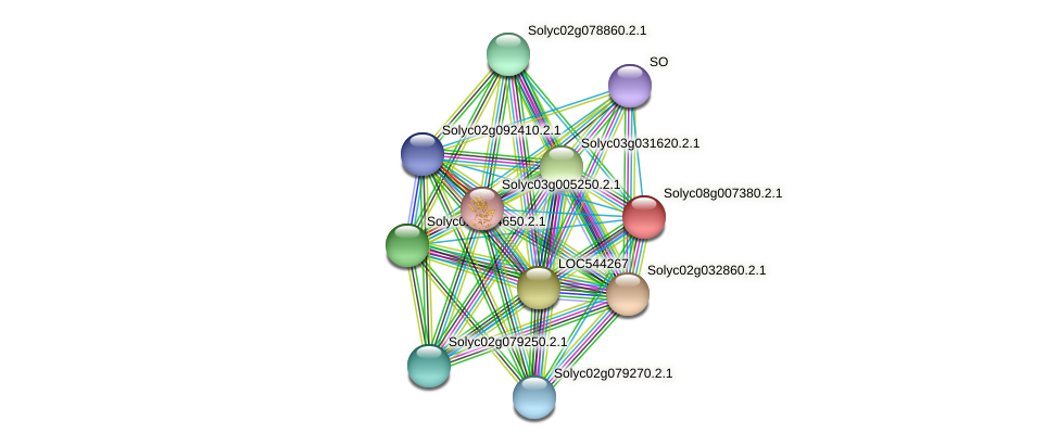 Solyc08g007380.2.1 protein (Solanum lycopersicum) - STRING interaction network