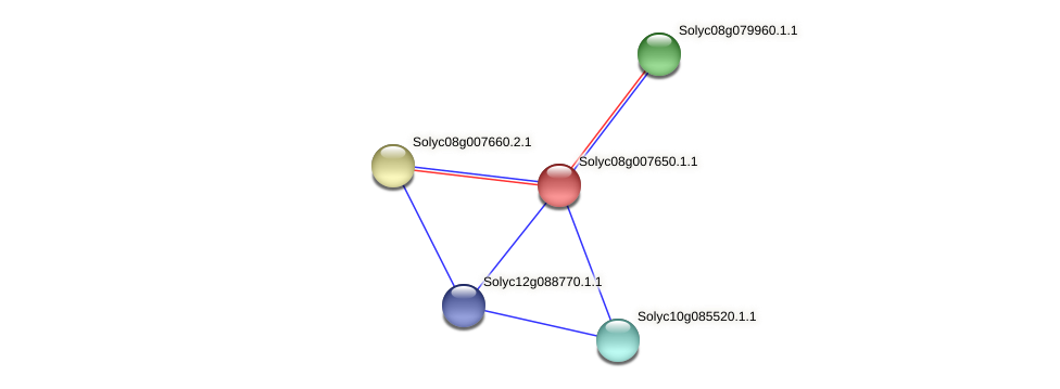 Solyc08g007650.1.1 protein (Solanum lycopersicum) - STRING interaction network