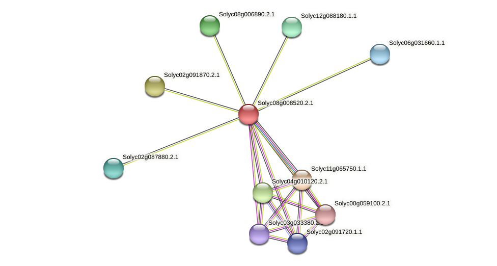 101264037 protein (Solanum lycopersicum) - STRING interaction network