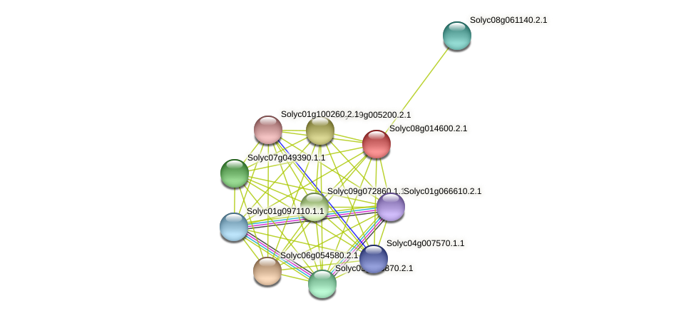 Solyc08g014600.2.1 protein (Solanum lycopersicum) - STRING interaction network