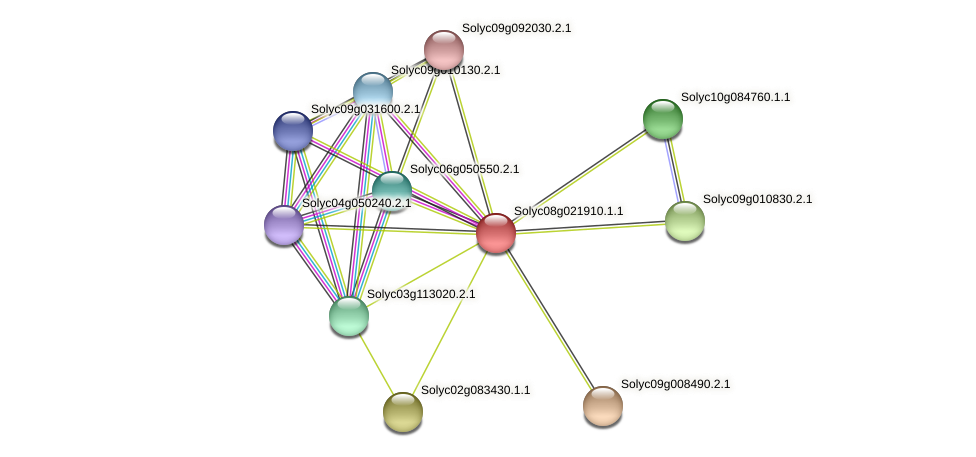 Solyc08g021910.1.1 protein (Solanum lycopersicum) - STRING interaction network