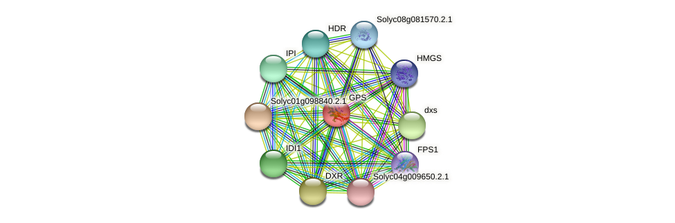 GPS protein (Solanum lycopersicum) - STRING interaction network