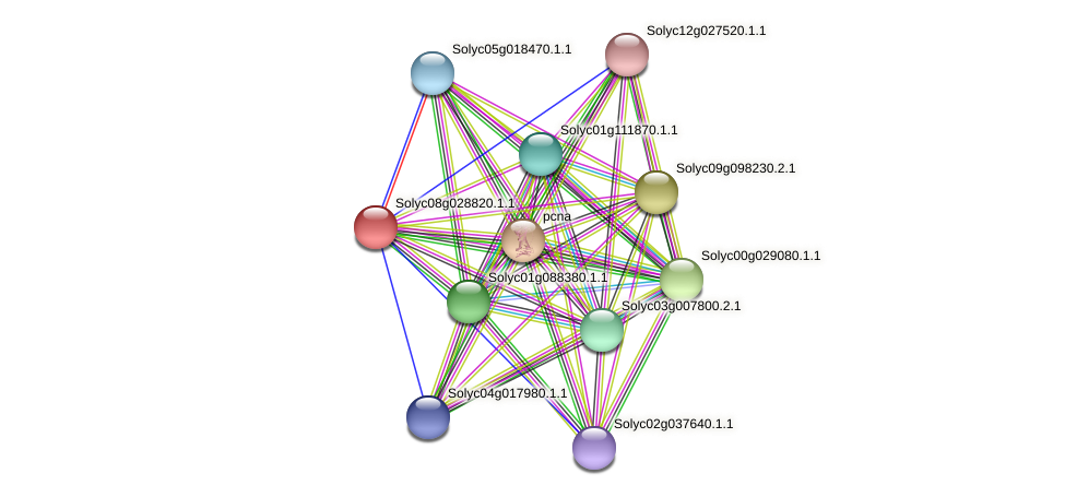 Solyc08g028820.1.1 protein (Solanum lycopersicum) - STRING interaction network