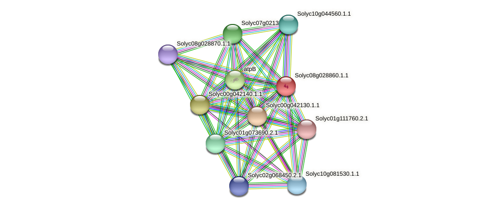 Solyc08g028860.1.1 protein (Solanum lycopersicum) - STRING interaction network
