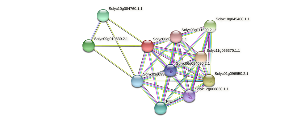Solyc08g041760.1.1 protein (Solanum lycopersicum) - STRING interaction network