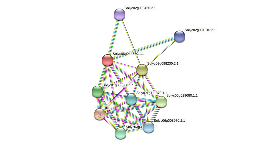 Solyc08g044360.1.1 protein (Solanum lycopersicum) - STRING interaction network