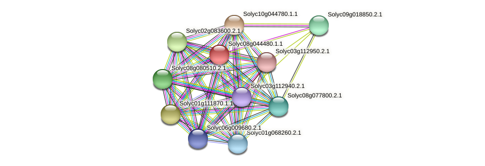 Solyc08g044480.1.1 protein (Solanum lycopersicum) - STRING interaction network