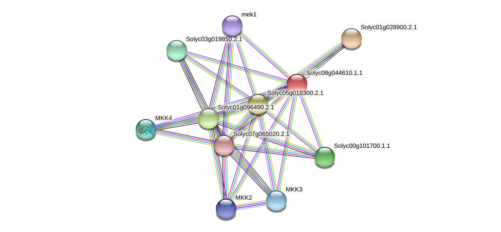 Solyc08g044610.1.1 protein (Solanum lycopersicum) - STRING interaction network