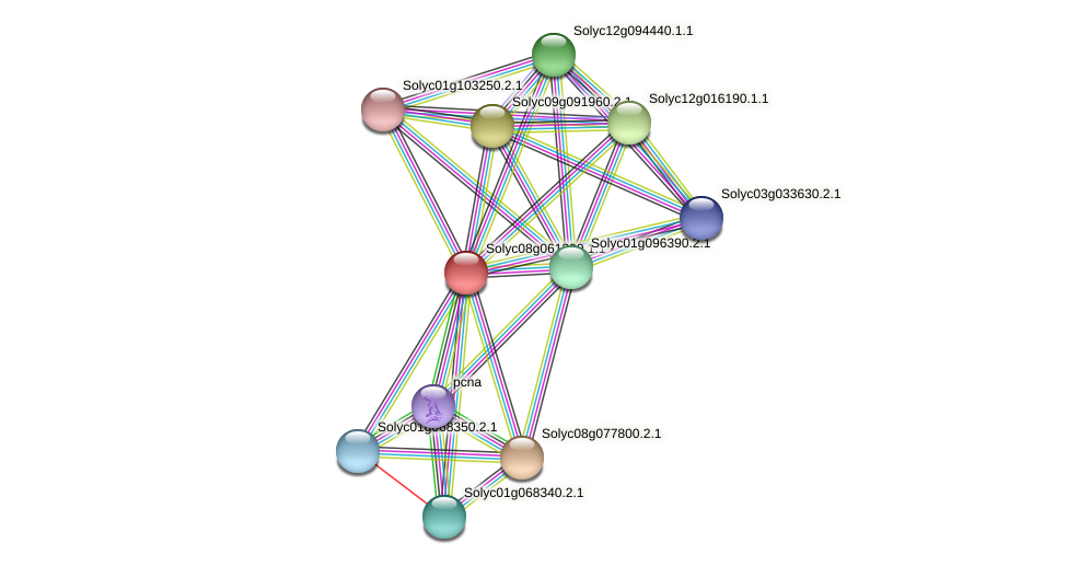 Solyc08g061390.1.1 protein (Solanum lycopersicum) - STRING interaction network