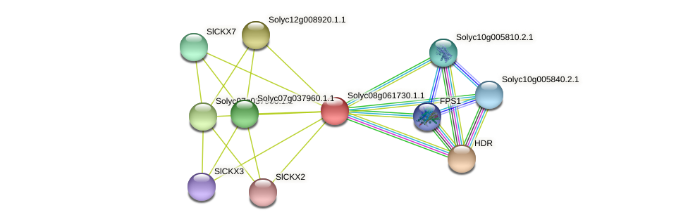 Solyc08g061730.1.1 protein (Solanum lycopersicum) - STRING interaction network