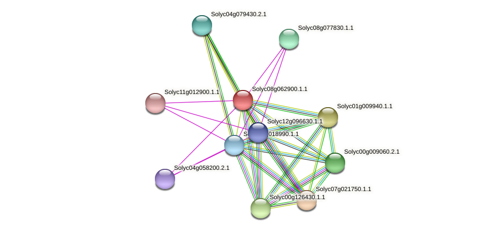 Solyc08g062900.1.1 protein (Solanum lycopersicum) - STRING interaction network