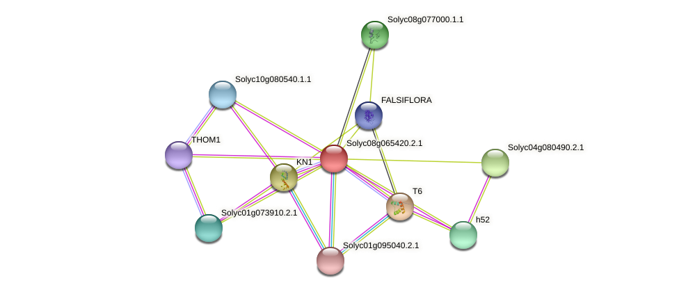Solyc08g065420.2.1 protein (Solanum lycopersicum) - STRING interaction network