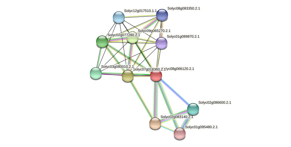 Solyc08g066120.2.1 protein (Solanum lycopersicum) - STRING interaction network