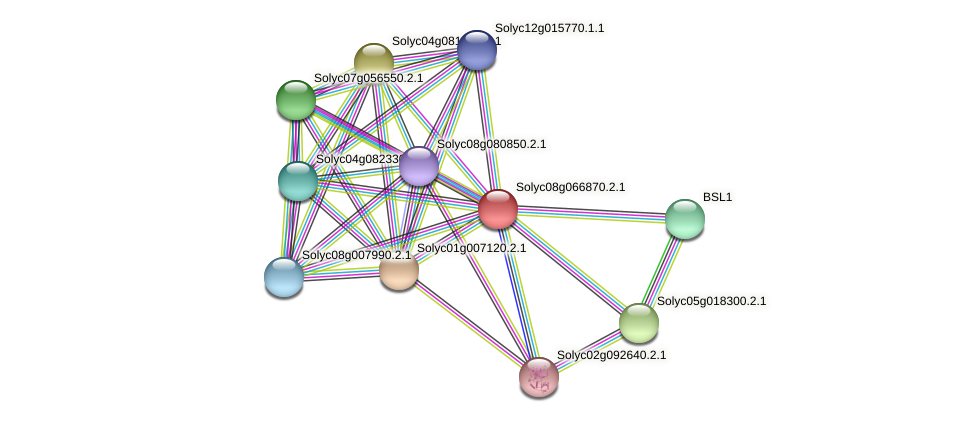 Solyc08g066870.2.1 protein (Solanum lycopersicum) - STRING interaction network