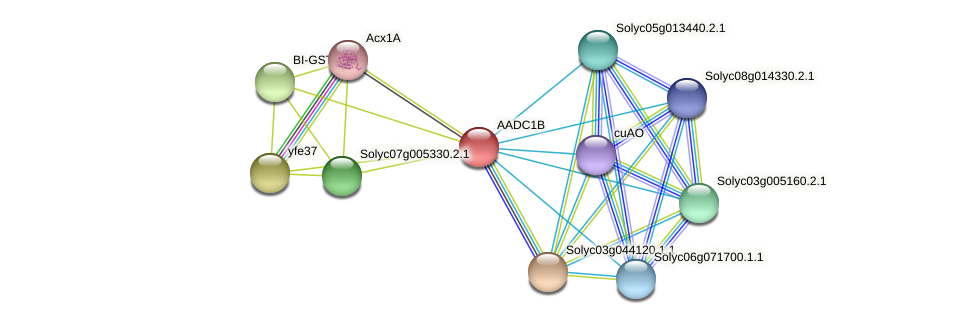 AADC1B protein (Solanum lycopersicum) - STRING interaction network