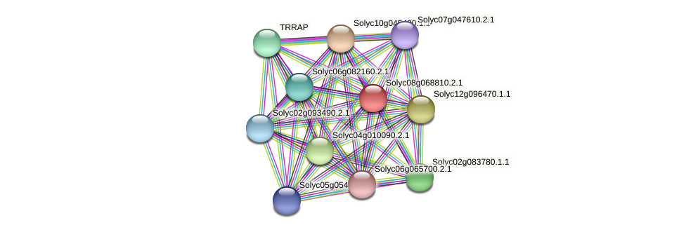 101268016 protein (Solanum lycopersicum) - STRING interaction network