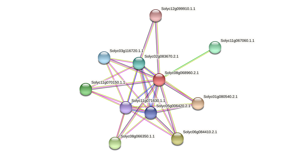 Solyc08g068960.2.1 protein (Solanum lycopersicum) - STRING interaction network
