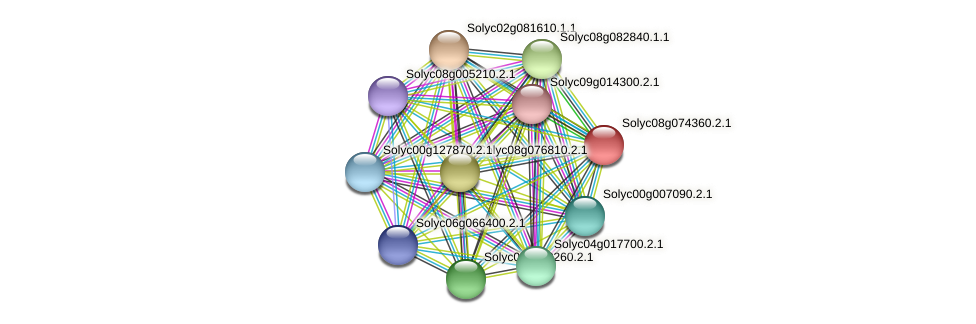 Solyc08g074360.2.1 protein (Solanum lycopersicum) - STRING interaction network